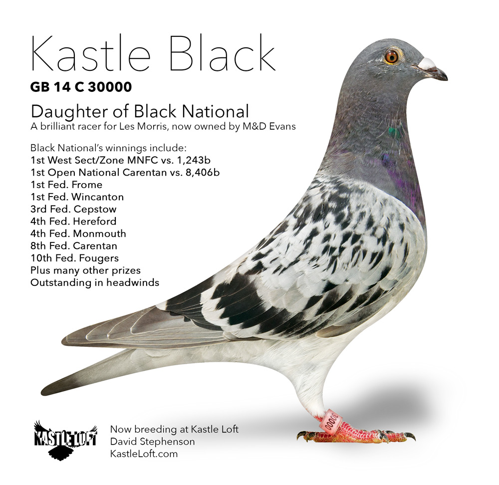 GB14-C30000-Kastle-Black