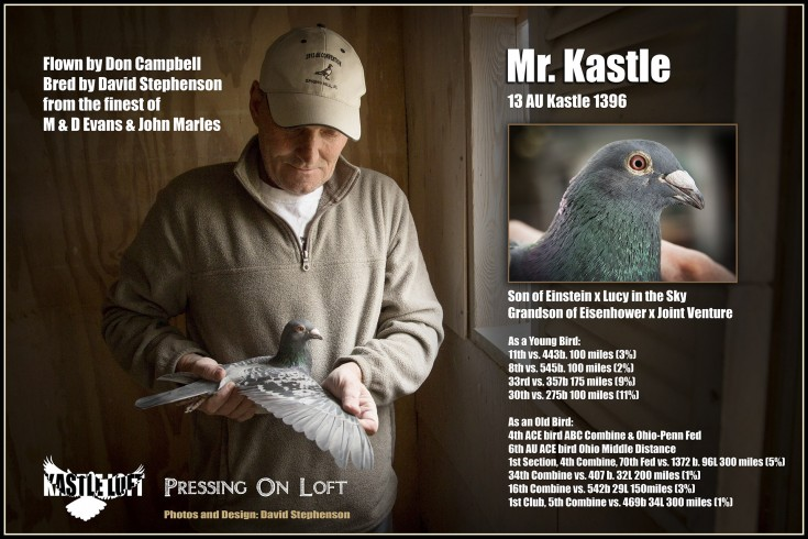 Kastle M&D Evans Racing Pigeon